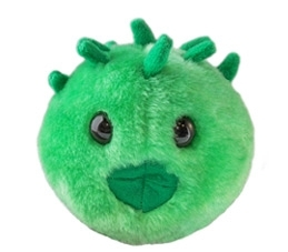 Soft Model Chlamydia (4TS-GM-CHL)
